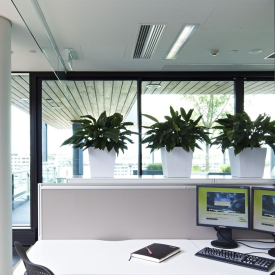 christmas-health-benefits-eco-green-office-plants