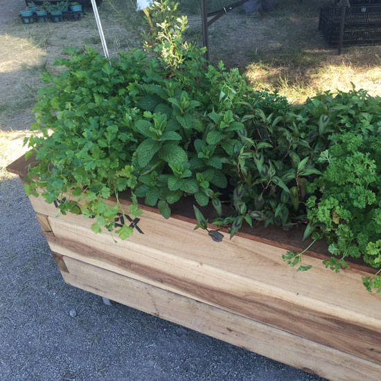 eco-green-office-plants-herb-gardens
