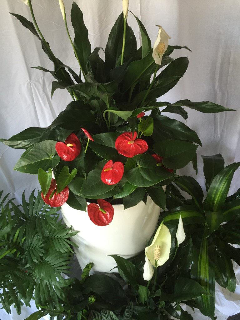 Tropical cluster of plants, peace lily, antherium, parlor palm, calathea, happy plant, event hire, short term hire, eco green office plants