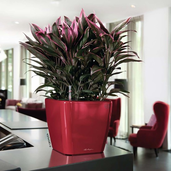 eco-green-office-plants-cube-quadro-three