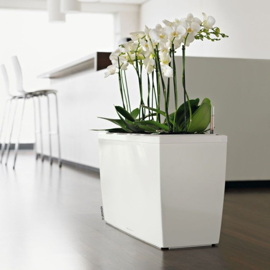eco-green-office-plants-cubes-trough-cararo-three
