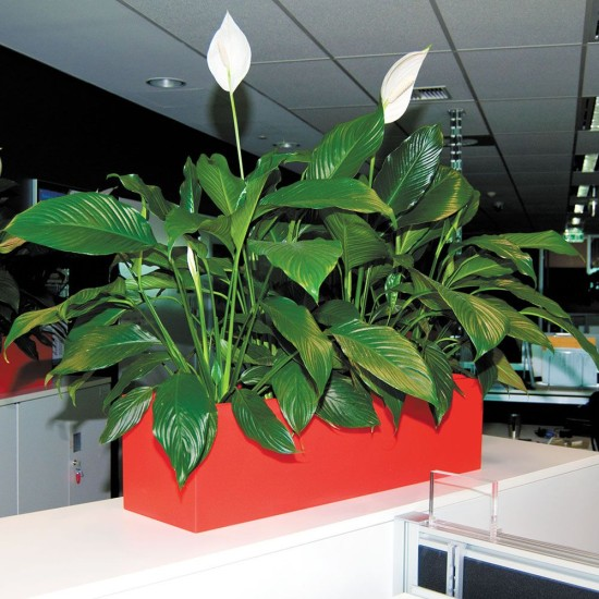 eco-green-office-plants-cubes-trough-urban-8-three
