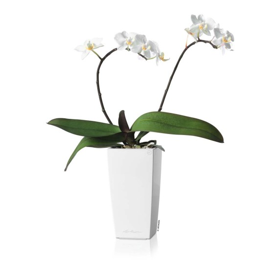 eco-green-office-plants-cubi-flowering-planter
