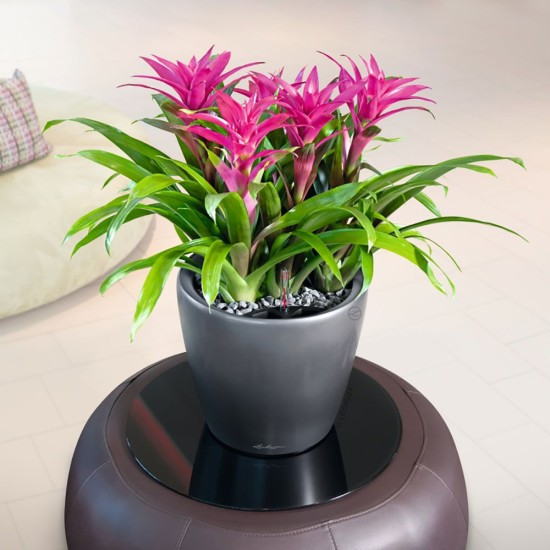 Flowering indoor office plant range eco green office plants for Flowering plants for indoors