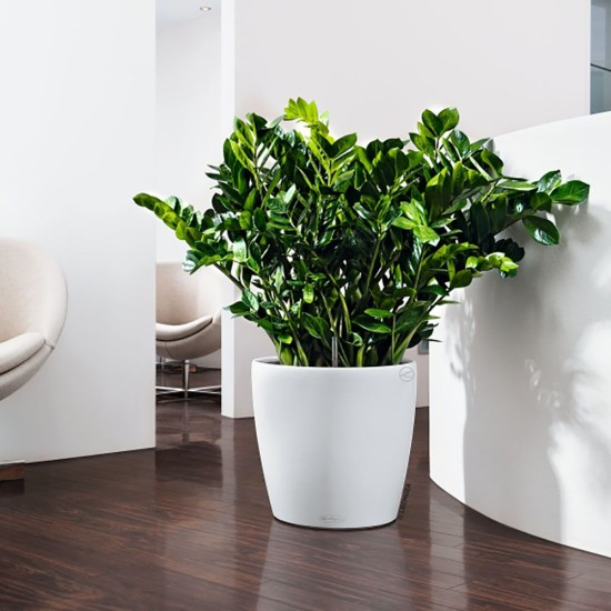 office indoor plants maintenance provided in hire costs