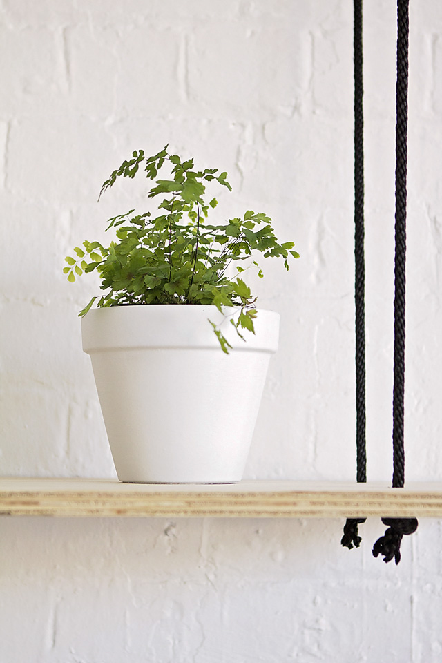 Maidenhair fern, indoor plant, eco green office plants, plant hire Melbourne