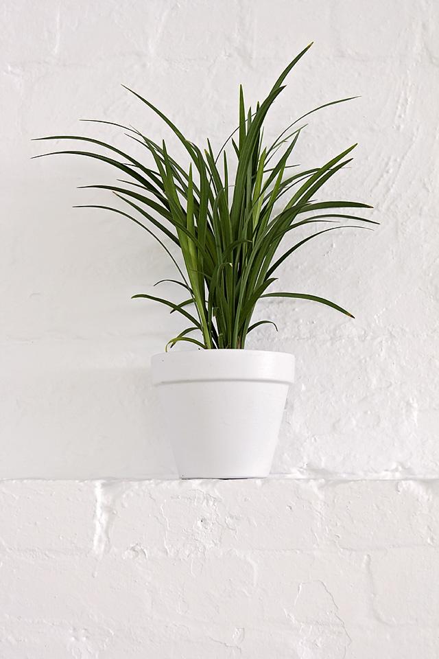 Liriope, plant hire, office plants, indoor plants melbourne, eco green office plants