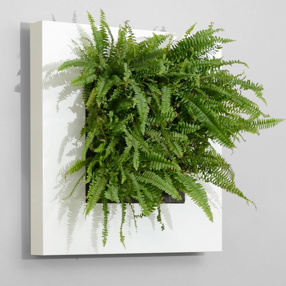 office-indoor-plant-wall-living-picture-frame-2