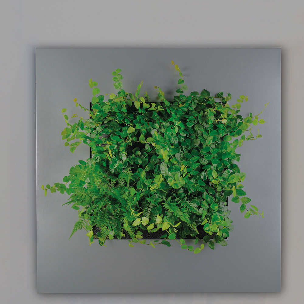Plant Wall Art plant walls and live wall art | eco green office plants