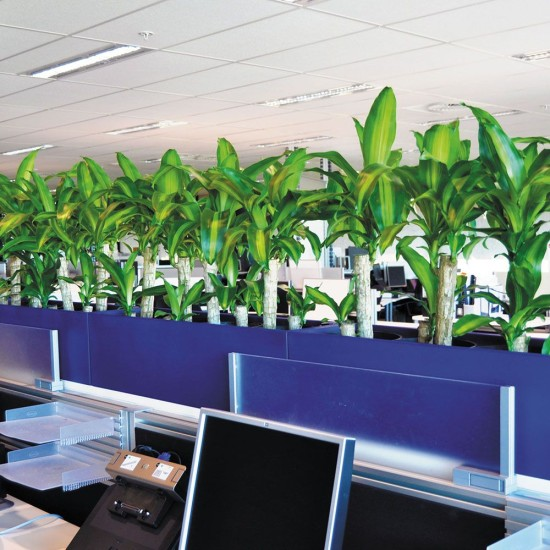 Troughs - Eco Green Office Plants
