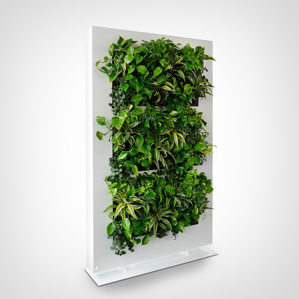 Plant Walls And Live Wall Art Eco Green Office Plants