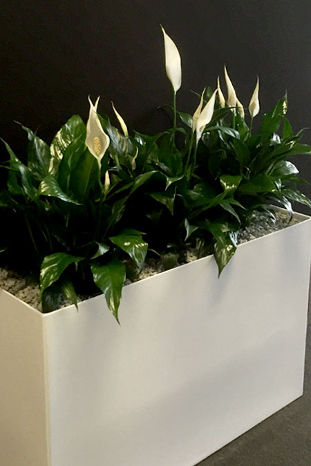 Troughs Eco Green Office Plants